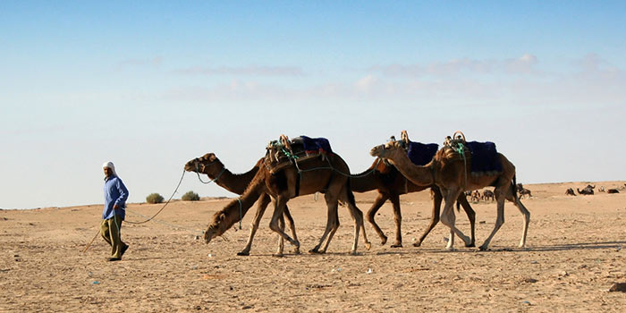 Feria del Camello de Bikaner