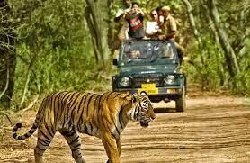 Qué hacer en Dandeli Wildlife Sanctuary