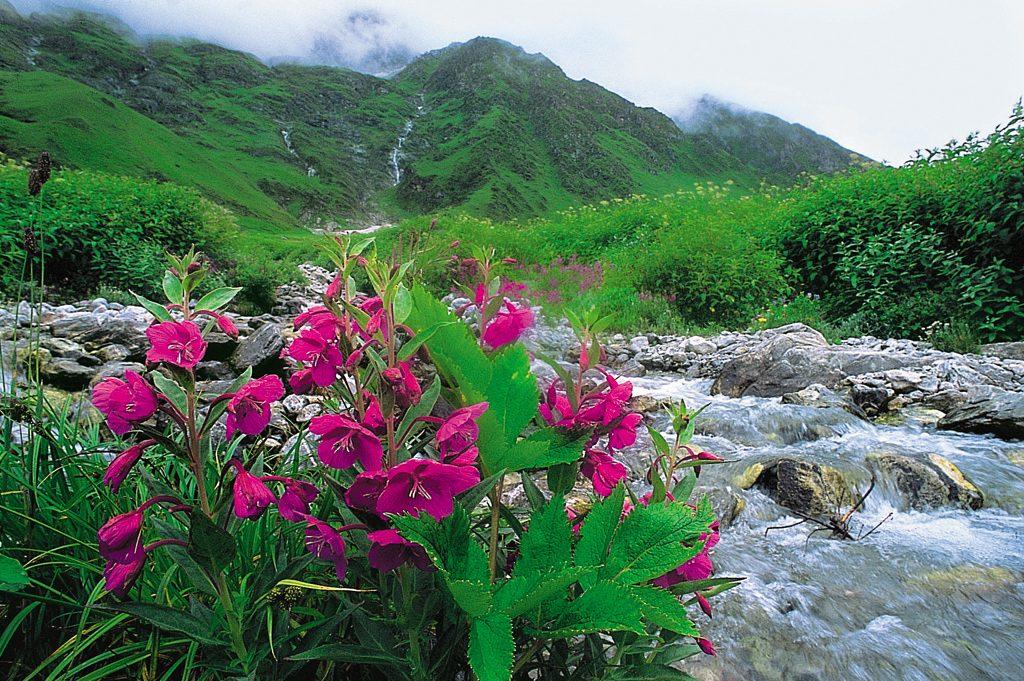 Explore el Valle de las Flores